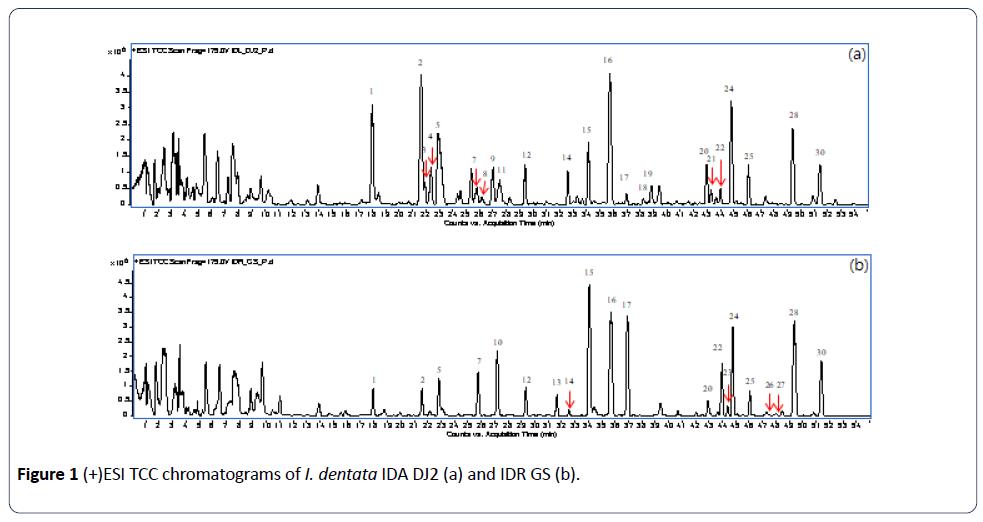 herbal-medicine-TCC-chromatograms